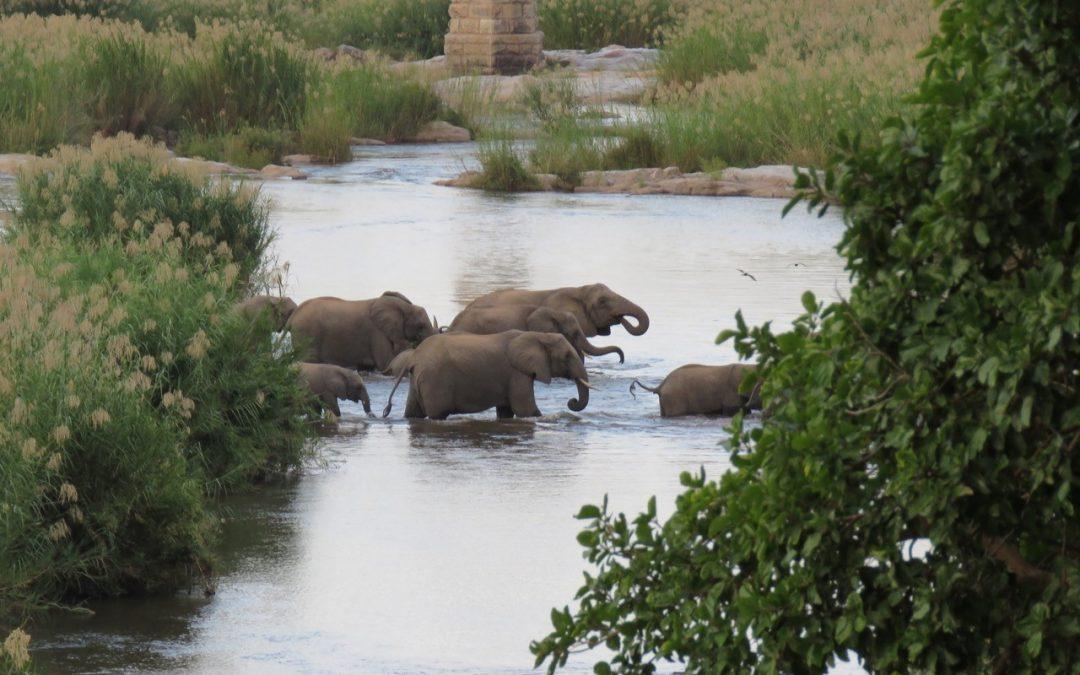 Route 2 weken; gezinsreis Zuid-Afrika vol wildlife spotten