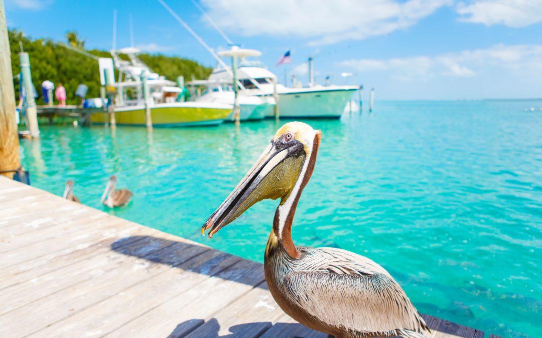 5 belevenissen die je niet mag missen in Florida