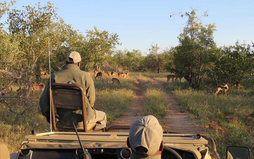Ku Sungula Safari Lodge in Olifants West Game Reserve