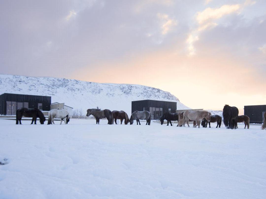 roadtrip-ijsland-akurgerdi-guesthouse-golden-circle